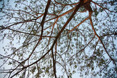 Branches of the tree. — Stock Photo