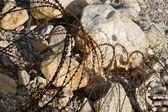 さびたワイヤー — ストック写真