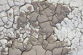 Cracking soil — Stock Photo