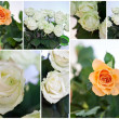 Collage  of white roses — Stock Photo