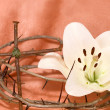 Crown of Thorns, crucifix and Easter white Lily — Stock Photo #8608169