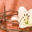 Stock Photo: Crown of Thorns, crucifix and Easter white Lily