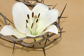 Crown of Thorns and Easter Lily — Stock Photo