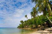 Morze i plaża z palmami kokosowymi i domy — Zdjęcie stockowe