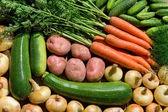 Fresh homegrown vegetables — Stock Photo