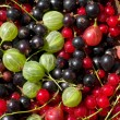 Stock Photo: Fresh berrys