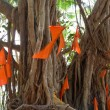 Stock Photo: Big banytree with flags