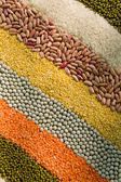 Colorful striped rows of dry grains — Foto Stock