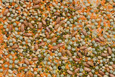 Variety of pulses essential for human life — Stock Photo