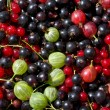 Fresh berrys — Stock Photo