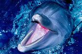 Delfín nariz de botella — Foto de Stock