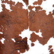 Brown Cowhide — 图库照片