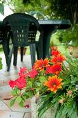 Flowers in garden — Stockfoto