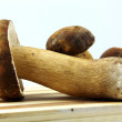 Mushrooms - Porcini, Boletus edulis - Stockfoto