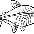 Cartoon x-ray fish for coloring book — Stock Vector