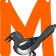 M for magpie - Vettoriali Stock