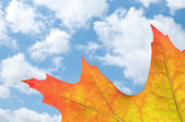 With oak leaf in autumn — Stock Photo