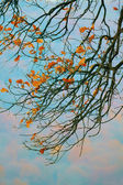 Tree branches in autumn — Stock Photo