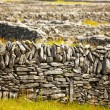 Stock Photo: Irish fences
