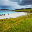 Stock Photo: Horse and riders on the beach