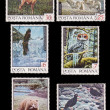 Romanian stamps - wild animals - ストック写真