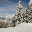 Stock Photo: Snowy tree tops 2