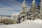 雪树顶 2 — 图库照片