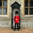 Grenadier Guard in stance - Foto Stock