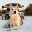 Winter portrait of a dog. — Stock Photo