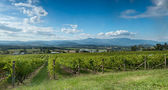 View of the Yarra Valley, near Melbourne, Australia — Stock Photo