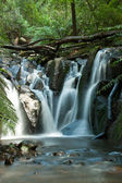 Dandenong Ranges, Olinda Falls, near Melbourne Australia — Stock Photo