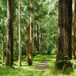 Forest, Dandenong Ranges National Park, YarrValley — Stock Photo #10373062