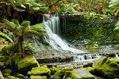 Horseshoe Falls, Mt Field National Park, Tasmania — Stock Photo