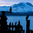Cormoran bird sits on a pier in winter in a Fjord in Norway — Stock Photo