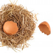 Straw nest with broken chicken eggshell — Stock Photo