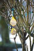 Vögel füttern im Winter vom Menschen verursachten Nahrungsquelle — Stockfoto