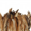 Chicken feathers are brown in color isolated on white background — Stock Photo