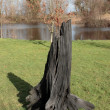 Solid black bog oak — Stockfoto