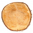 Stock Photo: Cross section of tree trunk