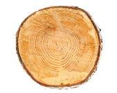 Coupe transversale de tronc d'arbre — Photo