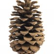 Single pine cone — Stock Photo #8878864