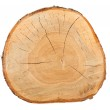 Top view of a birch stump — Stock Photo #9235640