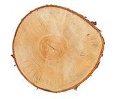 Tree stump top view — Stock Photo