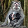 Sitting monkey — Stock Photo