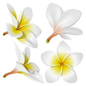 Hawaiian necklace flowers — Vector de stock