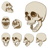 Seven skulls set — Stock Vector