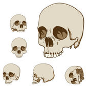 Five skulls set — Stock Vector