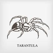 Tarantula spider. Vector — Stock Vector
