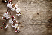 Spring blossom on wood background — Stock Photo