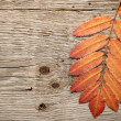 Autumn leaves on wood background — Stock Photo #10191509